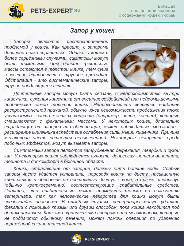 Запор у кошек