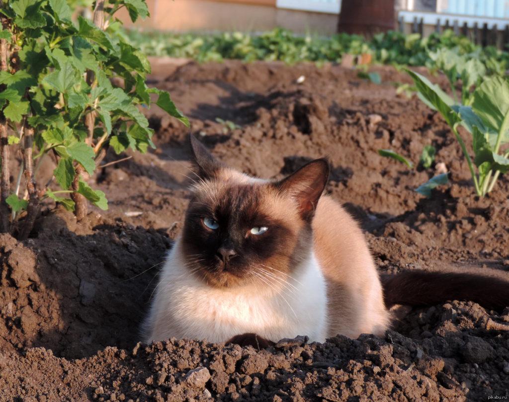 """Земля является самым натуральным """"наполнителем для лотка"""", признаваемым всеми котами"""