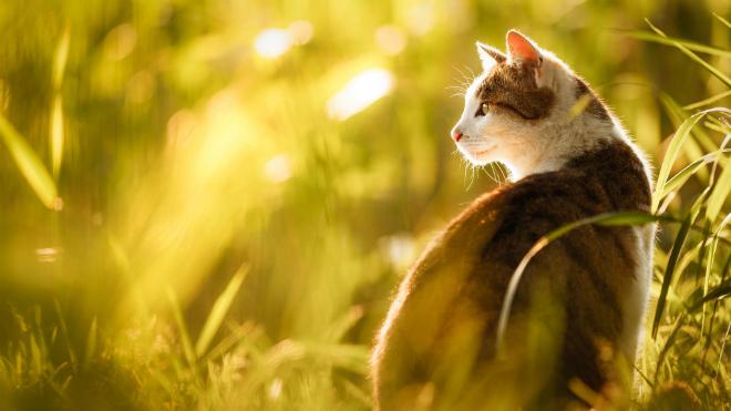 Зимняя и летняя шерсть кошек отличаются друг от друга по степени густоты