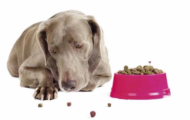 Зрелым и пожилым собакам изменения в питании как правило даются нелегко