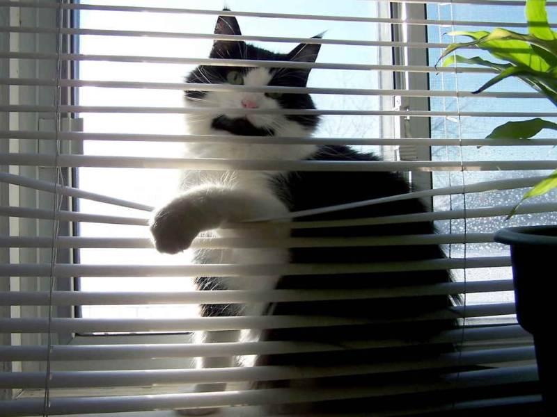 Иногда кошки лезут в цветочные горшки, чтобы привлечь внимание