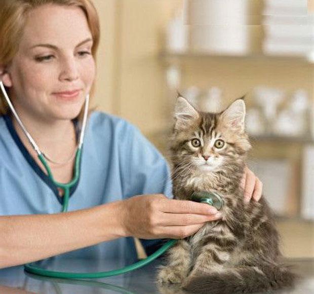 Исчерпывающий анамнез поможет ветеринару быстрее разобраться в состоянии питомца
