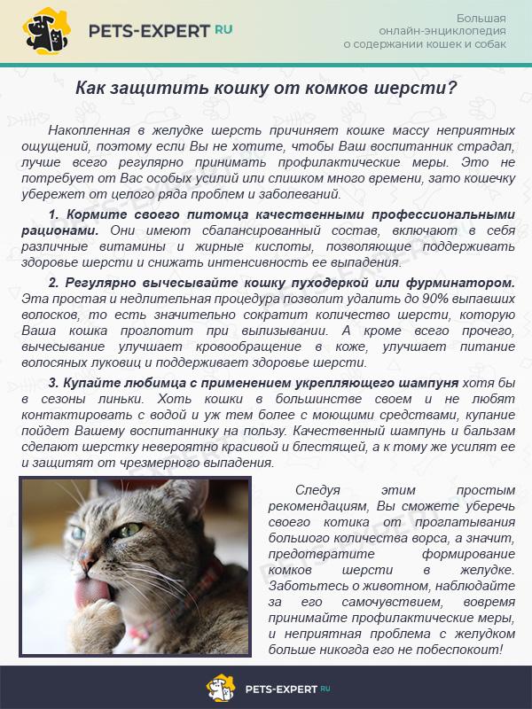 Как защитить кошку от комков шерсти в желудке при линьке?