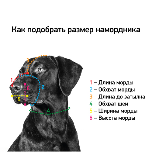 Как измерить размеры намордника на собаке