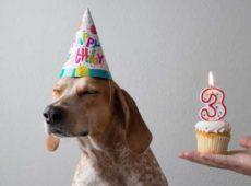 Как определить возраст собаки