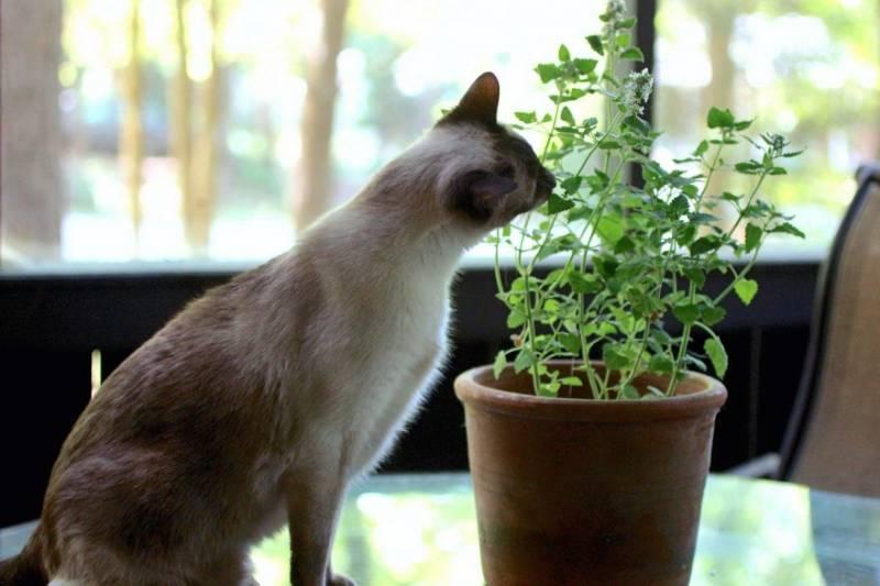 Как отучить кошку лазить в цветочные горшки?