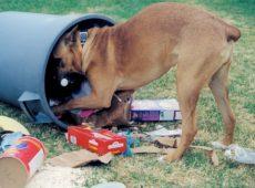 Как отучить собаку подбирать еду на улице