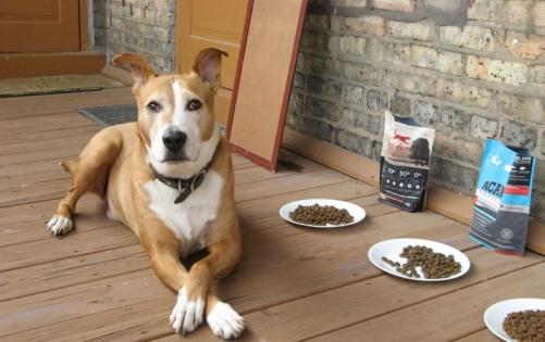 Как перевести собаку на другой сухой корм