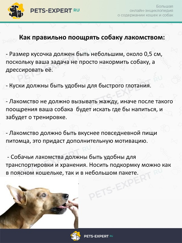 Как поощрять собаку лакомством при дрессировке