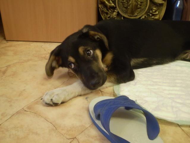 Как приучить щенка оставаться одному в квартире?