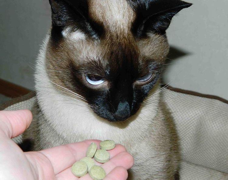 Как проглистогонить кошку в домашних условиях?