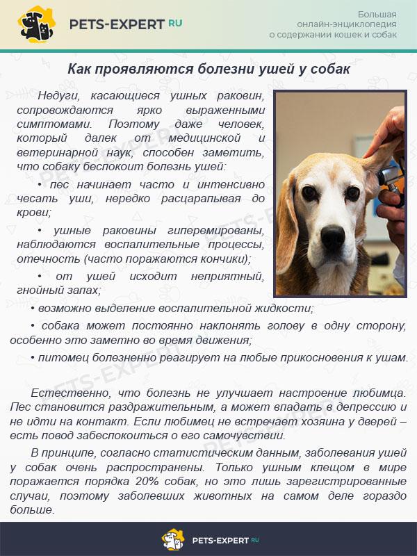 Как проявляются болезни ушей у собак