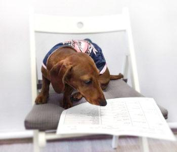 Собака с документами
