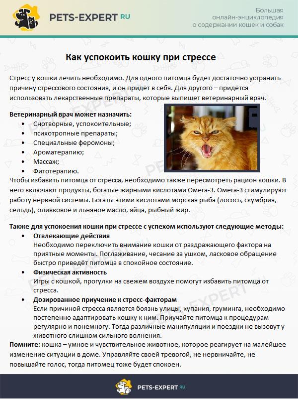 Как успокоить кошку при стрессе