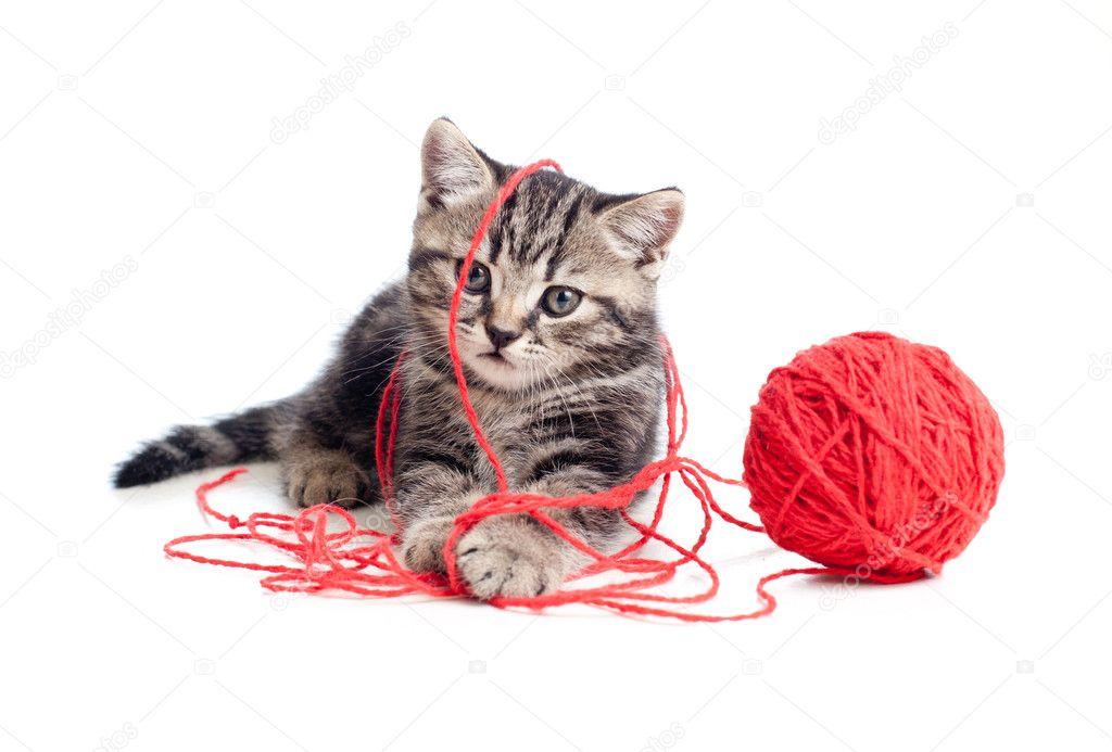Клубок - кошачий мячик