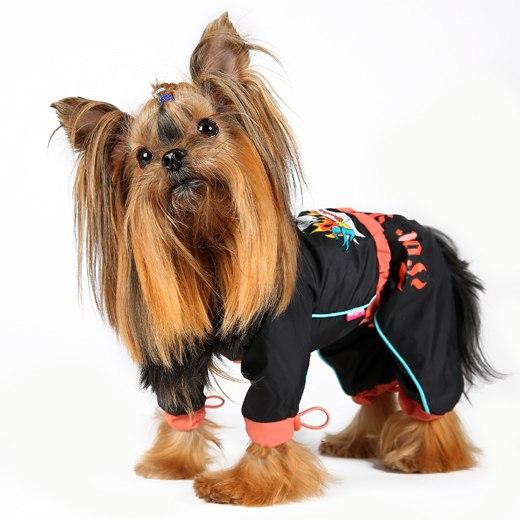 Комбинезон не только защитит собаку от непогоды, но и украсит ее