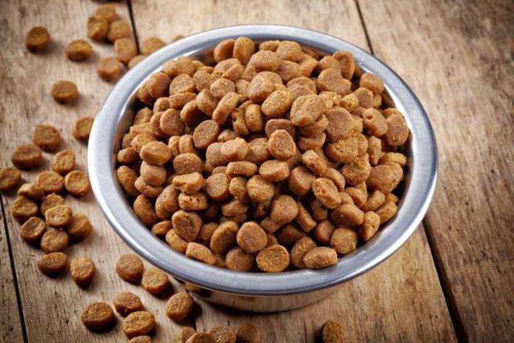 Кормление кошек сухим кормом требует правильного выбора продукции