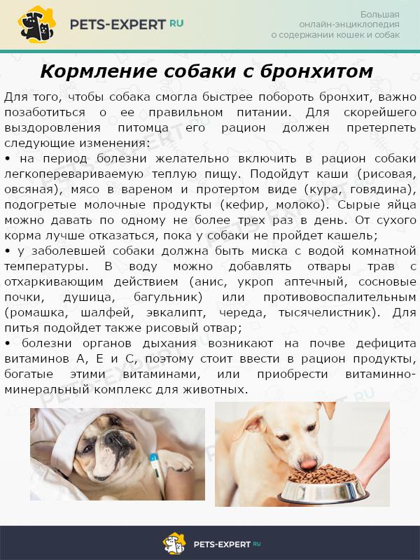 Кормление собаки с бронхитом