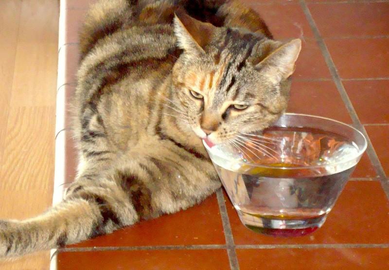 Корм, в особенности сухой, должен запиваться обильным количеством воды
