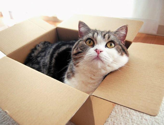 Коробка нашлась - жизнь удалась!
