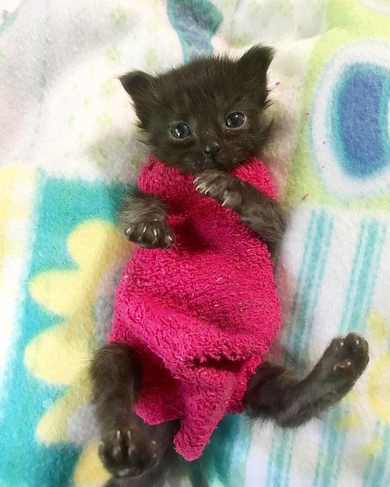 Котенка легче приучить к одежде