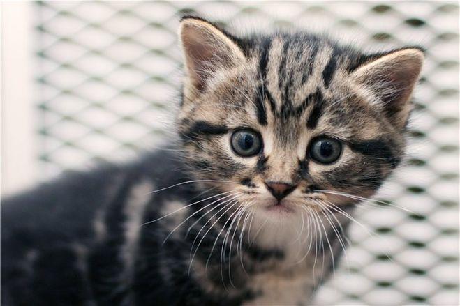 Котенок со схематической «М» на лбу