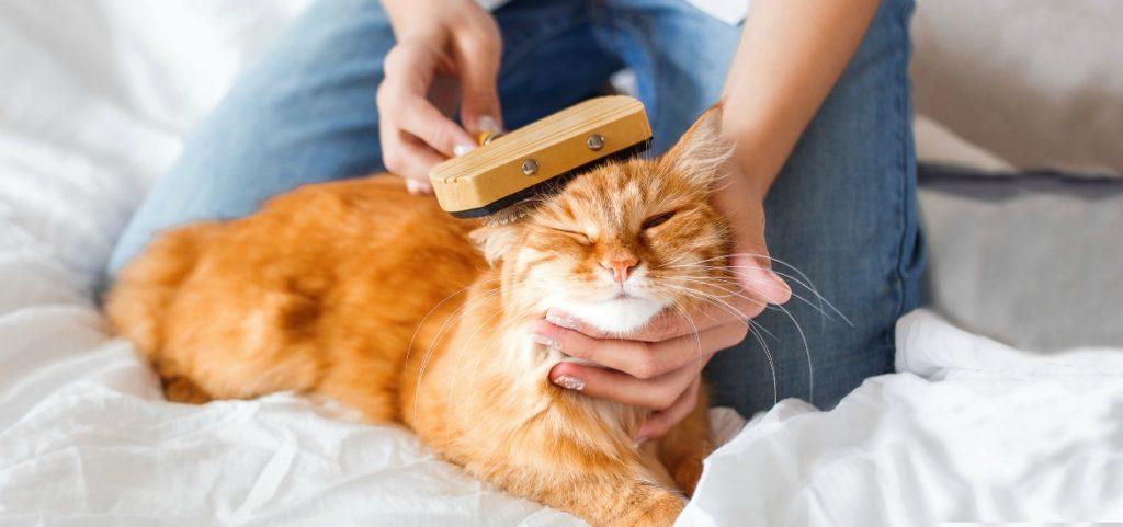 Коты-домоседы могут оставлять после себя шерсть круглый год