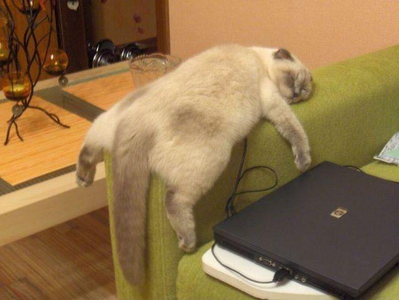 Коты могут бурно реагировать на происходящие в сновидениях события