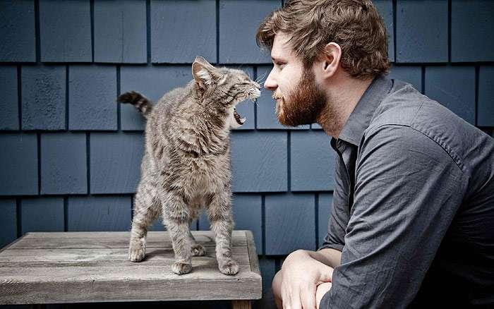 Коты проявляют агрессию, если что-то не нравится