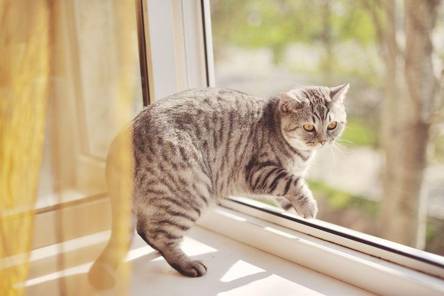 Кот выпал из окна