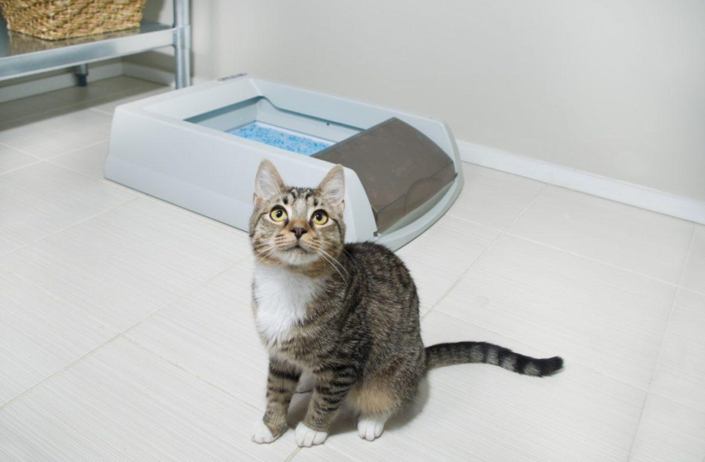 Почему кошка перестала ходить в лоток и как исправить ситуацию что делать
