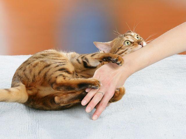 Кот, пребывающий в шоке, готов набросится на любого, кто попадется ему на глаза