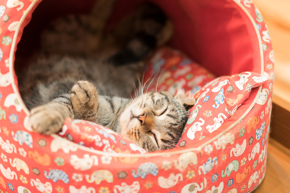 Кот спит в своём домике