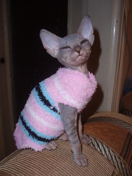 Жилет для кошки из носка