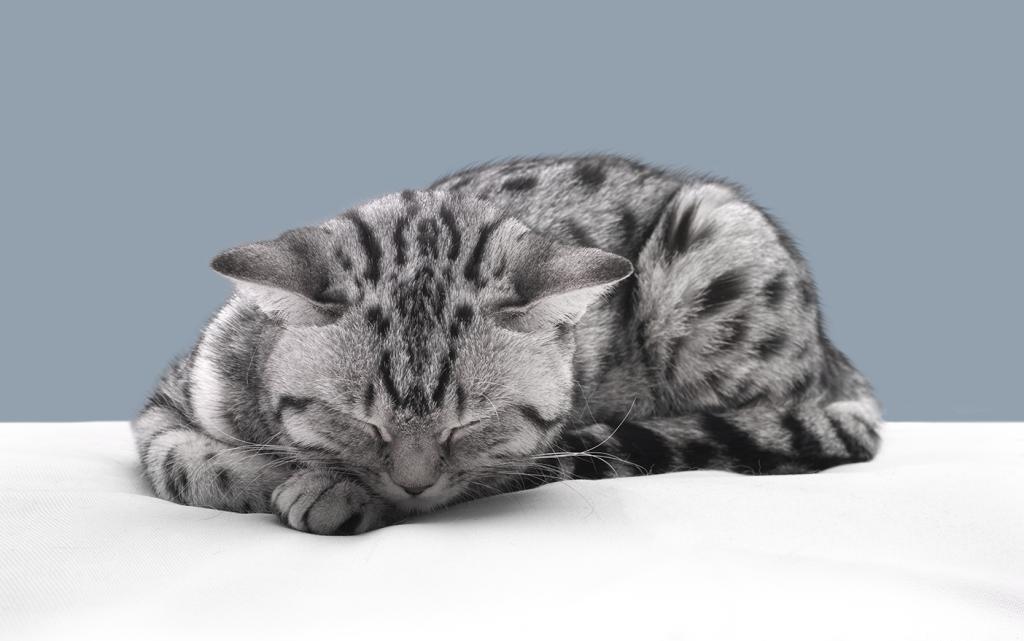 Кошка явно устала после вязки