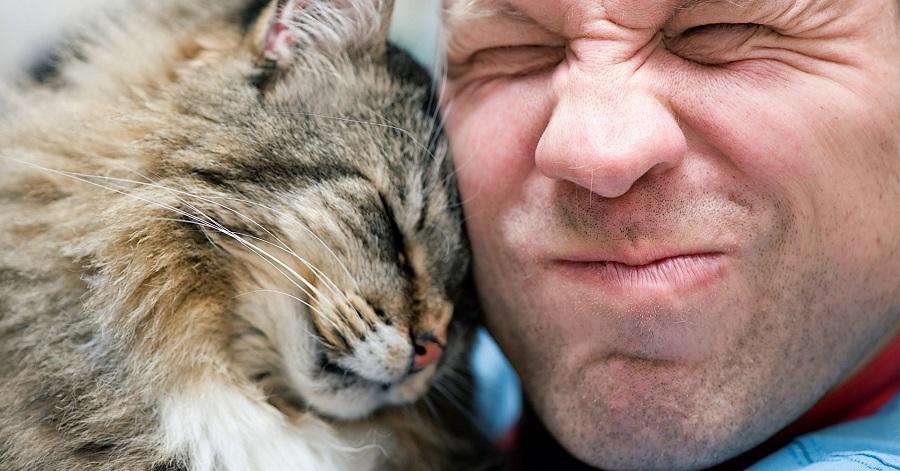 Кошкам нравится «кокетничать» с хозяином