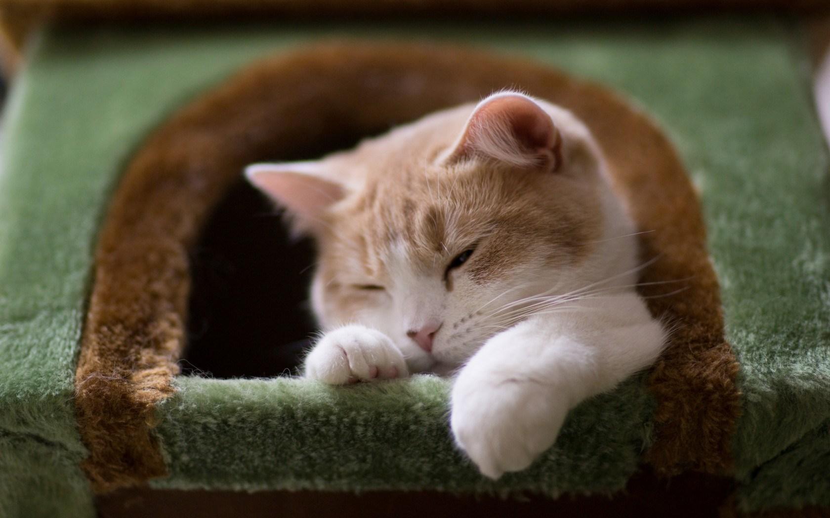 Кошка отдыхает в домике