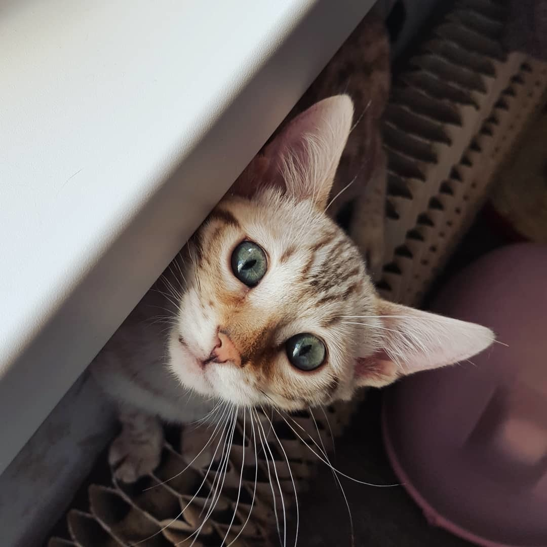 Кошку бить нельзя