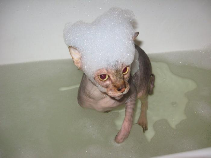 Купать животное необходимо с использованием лечебных шампуней, прописанных ветеринаром