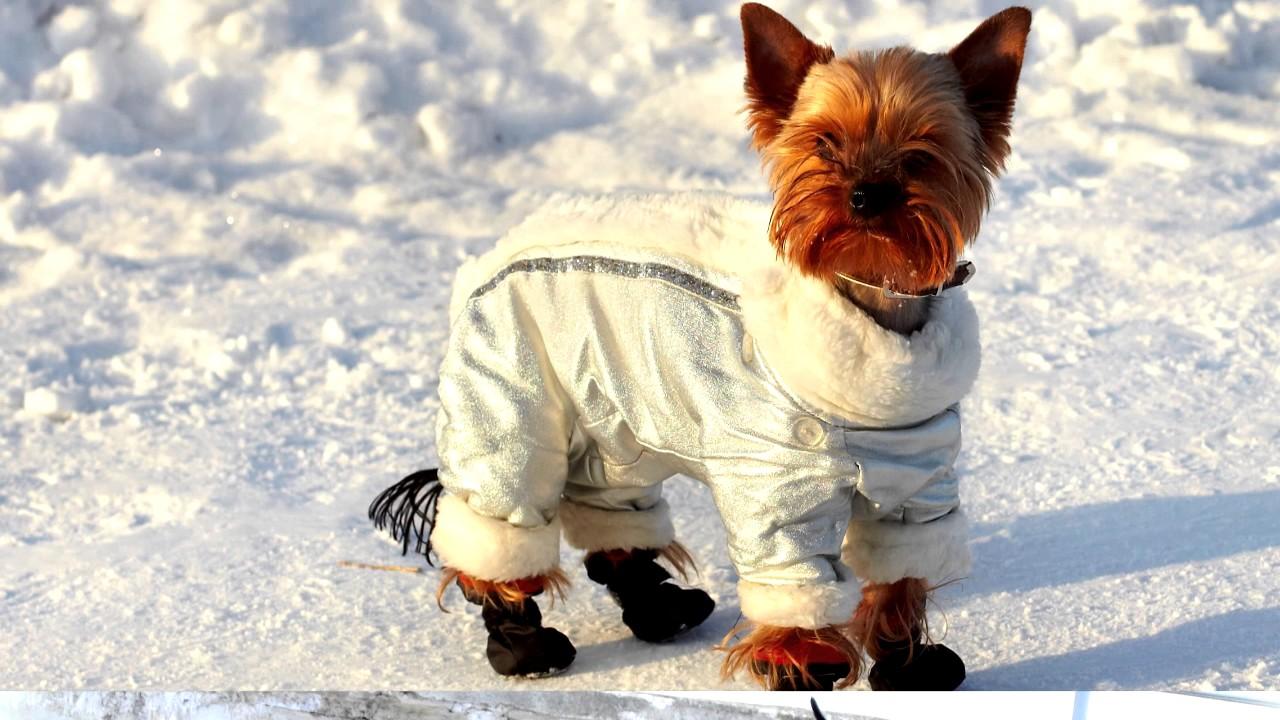 Купите на зиму комбинезон псу, чтобы он не простыл