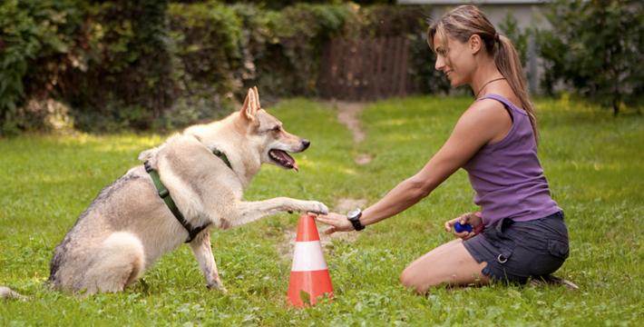 Курсы помогают хозяевам наладить хороший контакт с собакой