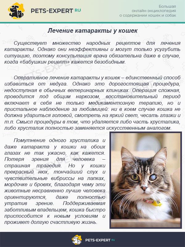 Лечение катаракты у кошек