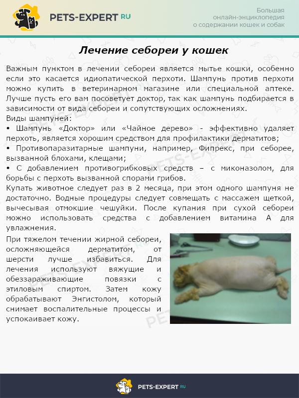 Лечение себореи у кошки