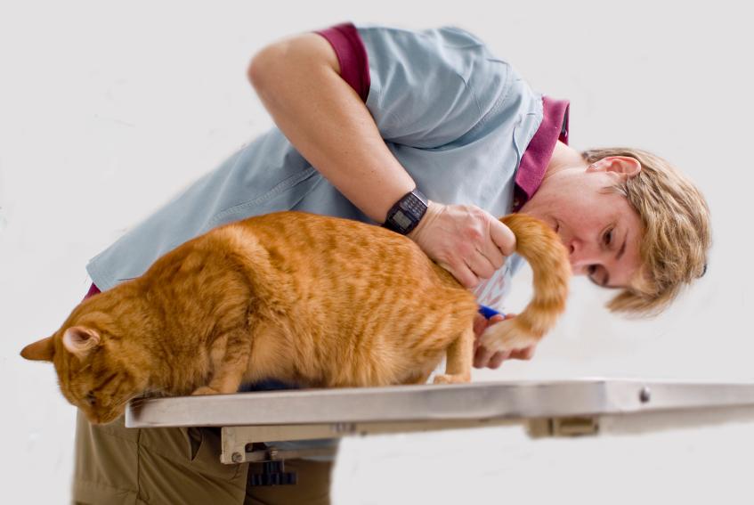 Лечение цистита происходит под контролем ветеринара