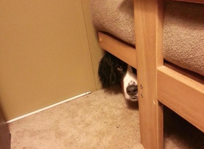 Любые разбрызгиваемые вещества вызывают у собак желание удалиться от источника запаха