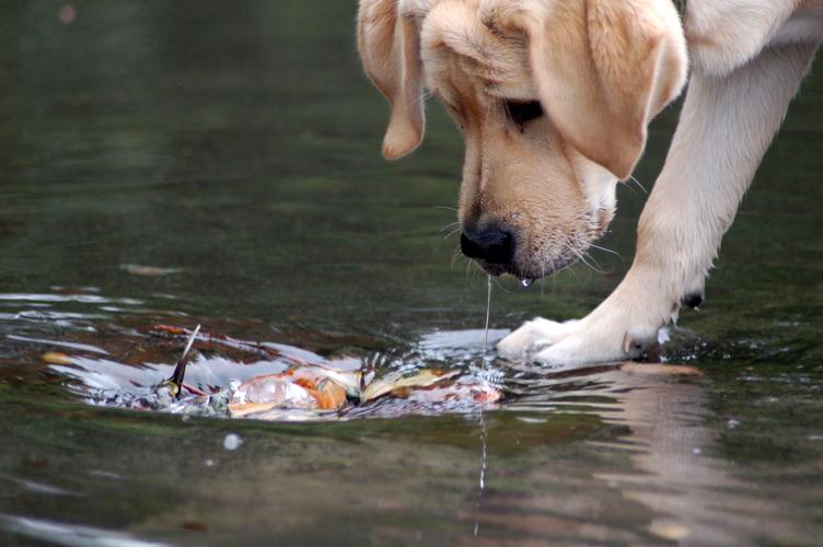 Многие патогенные бактерии и паразиты обитают в лужай и прочих водоемах