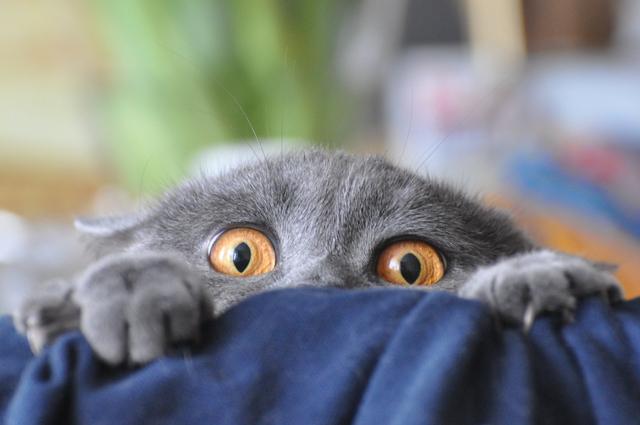 Наказанный кот