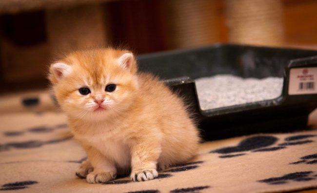 Научение ни в коем случае не должно ассоциироваться у котенка с наказаниями или агрессией
