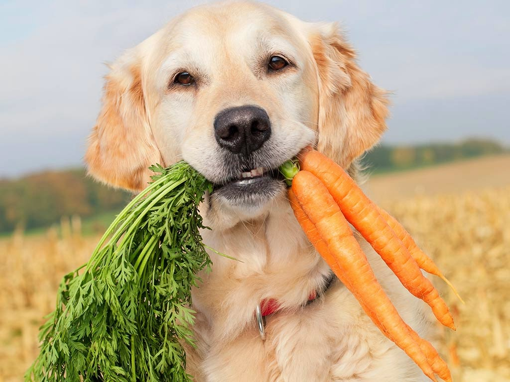 На период ложной щенности собаку необходимо посадить на строгую диету
