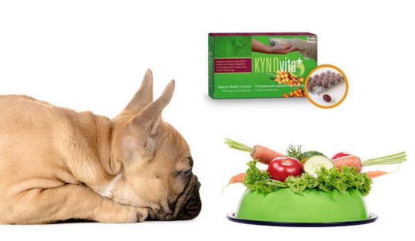 Недостаток витаминов и полезных веществ в организме негативно сказывается на шерсти собаки